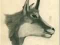 Gams,Bleistift 19x25,5-1969_a
