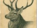 Hirch, Bleistift 20x24,7-1969_a