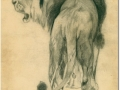 Löwe,Bleistift 20x30 cm-1969_a