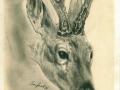 Rehbockhaupt, Bleistift 18x25-1970_a
